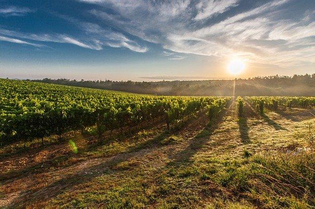 soumrak a vinice